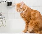 В ванну любой ценой: как заставить кота искупаться